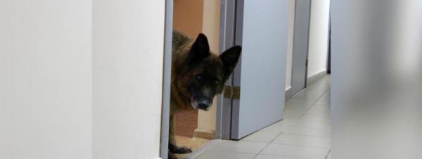 Собака-полицейский: Как живут и работают хвостатые стражи порядка в Башкирии34