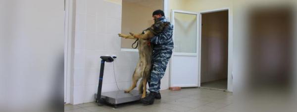 Собака-полицейский: Как живут и работают хвостатые стражи порядка в Башкирии28