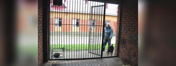 Собака-полицейский: Как живут и работают хвостатые стражи порядка в Башкирии5
