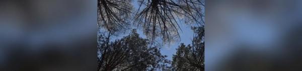 В Башкирии мужчина погиб под упавшим деревом0