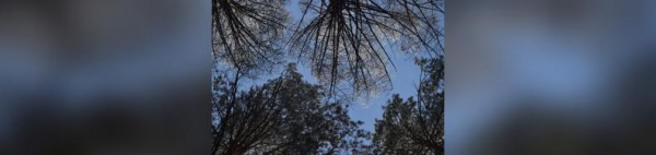 Photo of В Башкирии мужчина погиб под упавшим деревом