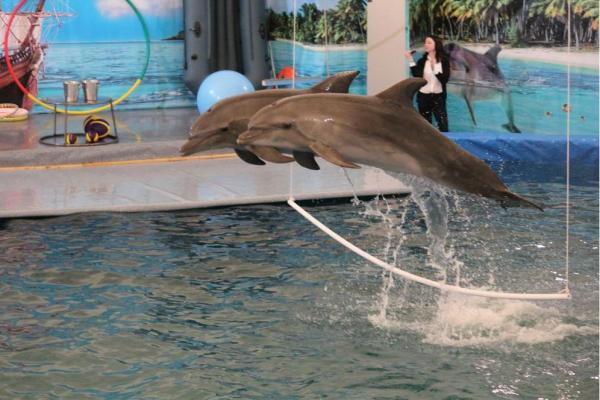 Photo of Радий Хабиров раскритиковал организацию публичных слушаний по «дельфинарию»