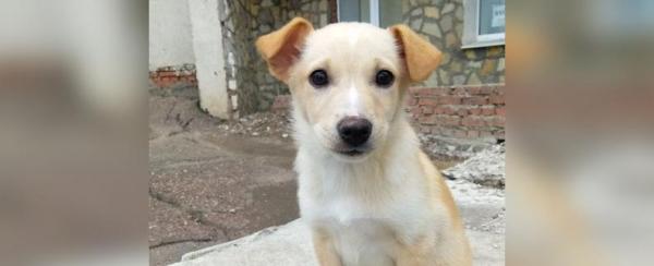 Photo of В Уфе 14-летнюю школьницу затравили из-за выброшенного на улицу щенка из приюта