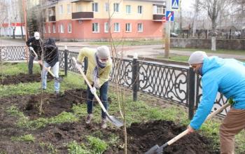 Photo of В Стерлитамаке высадили более 100 деревьев-крупномеров