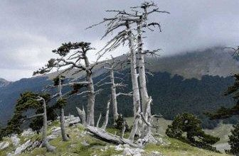 Photo of Деревья помогли ученым определить последствия средневековой чумы