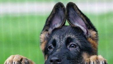 Photo of В Стерлитамакском районе планируют выделить более полумиллиона рублей за отлов и содержание безнадзорных собак